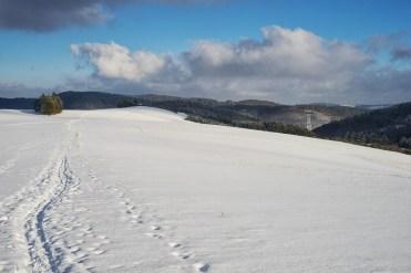 Traumpfad Bergheidenweg (31)