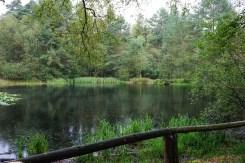 Naturschutzgebiet Schluchten und Moore im Furlbachtal (6)