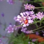 Bilderstrecke: Ein bienenfreundlicher Garten