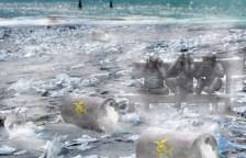 Plastik im Meer wird alles vernichten