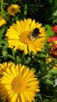 Bienenfreundliche Stauden für den Halbschatten
