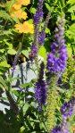 Bienenfreundliche Stauden für den Sonnenbereich