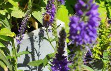 Bienenfreundliche Stauden passen in jeden Garten.