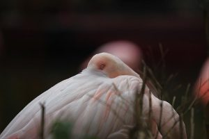Flamingo-(4)