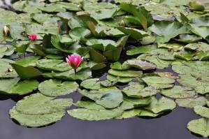 Parc de Claude Monet (13)