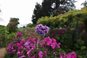 Parc de Claude Monet (2)