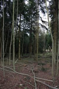 Söhrer Forst (6)