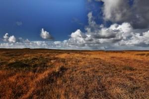 Morsum-Kliff-(4)