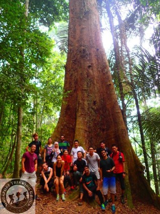 Gunung Lambak 1 day trip hike with Singapore Trekking Group - Group Photo with The Big Tree in Gunung Lambak