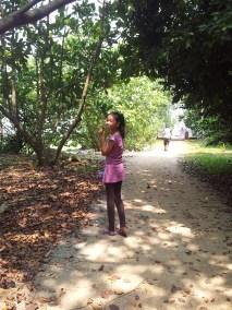 On the way to Pulau Ubin Chek Jawa Mangrove