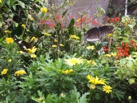 Cameron Highlands Butterfly Farm - Butterflies