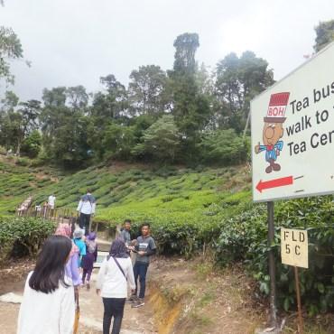 Tea Bush to Sungei Palas BOH Tea Centre