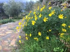 Seaview Faralya Butik Otel Planted Yellow Daisy