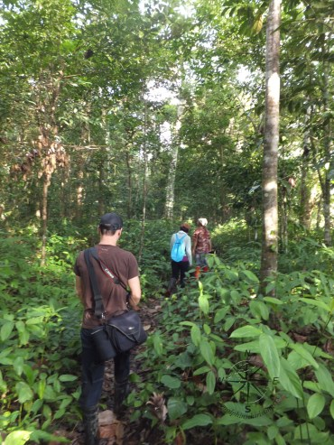 Morning Jungle Trekking in Kampung Sukau Forest near Sukau Evergreen Lodge Kinabatangan