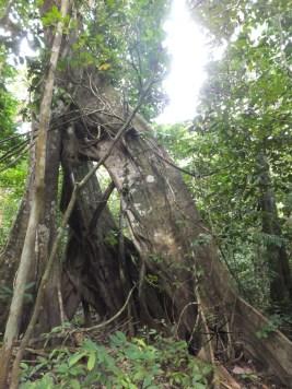 Mushroom on ground during Morning Jungle Trekking in Kampung Sukau Forest near Sukau Evergreen Lodge Kinabatangan