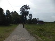 2D1N Wildlife Nature Walking Back to Sukau Evergreen Lodge Kinabatangan