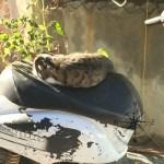 Explore Canakkale, Turkey – Street Kedi aka Street Cats Resting on Bike