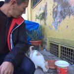 Explore Canakkale, Turkey – Street Kedi aka Street Cats Eating