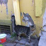 Explore Canakkale, Turkey – Street Kedi aka Street Cats Looking at us