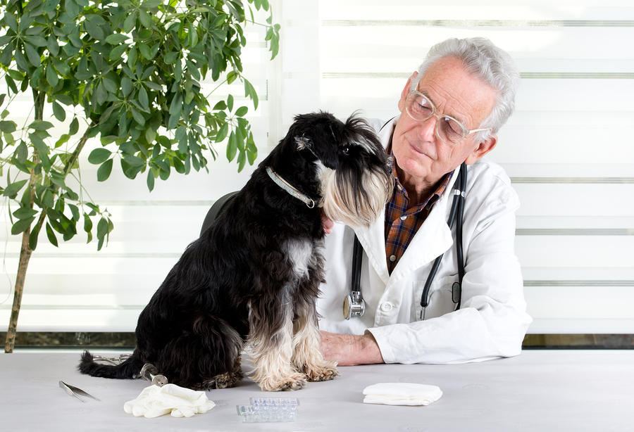 Veterinarian With Dog