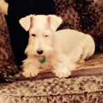 Queenie - Adopted 3