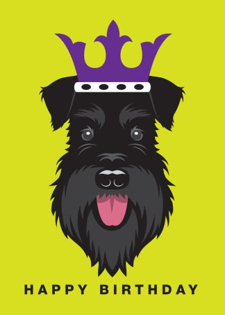 All black schnauzer wearing a crown on a lime green background