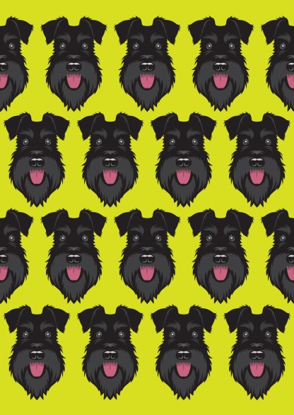 All black schnauzer on lime background