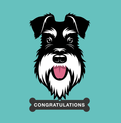 greetings card silver and black schnauzer - congratulations