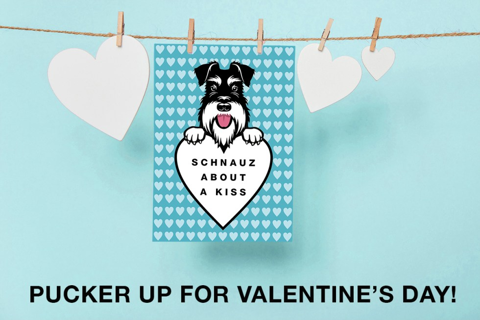 schnauz about a kiss valentine card