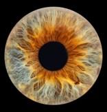 Auch braune Augen offenbaren ein wunderschönes Iris-Muster welches durch usnere spezielle Makrotechnik bei der Irisfotografie sichtbar wird