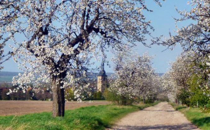 Walpurgishexe und Kirschblüte - 24.4.15   (37)