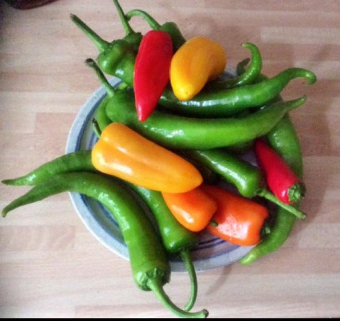24.2.16 - Geschmorte Pepperoni,Reis,vegetarisch (3) - Kopie