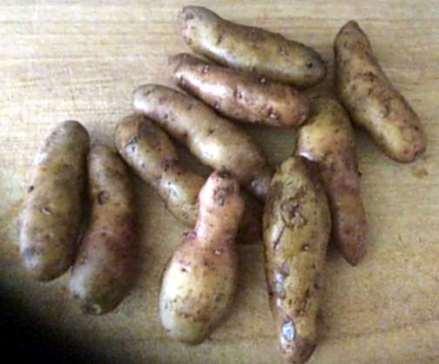 7.5.16 - Schollenfilet,Salaat,Kartoffel,pescetarisch (4)