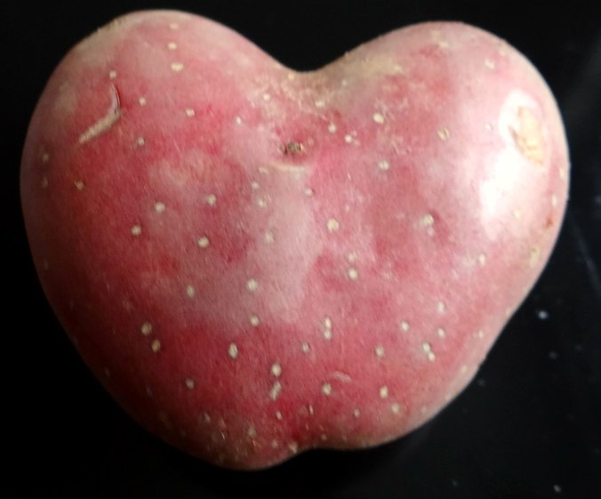 Rohgebratene Kartoffeln,Möhrensalat,Rote Bete Salat (11)