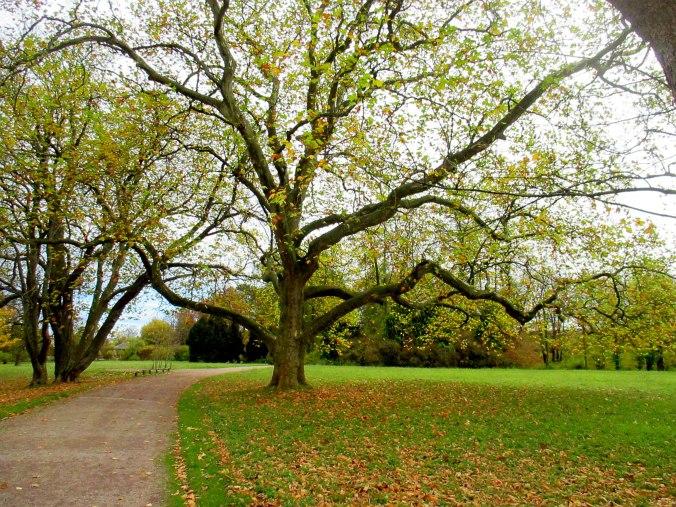 Belvedere im Herbst (5)