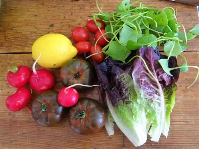 Wolfsbarsch,Salat,Kartoffeln (12)