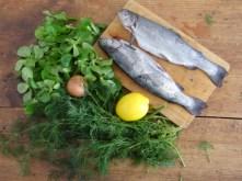 Forelle mit kalter Dillsauce und Feldsalat (10)