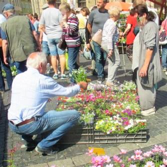 Weimarer Blumenmarkt 19.05 (15)