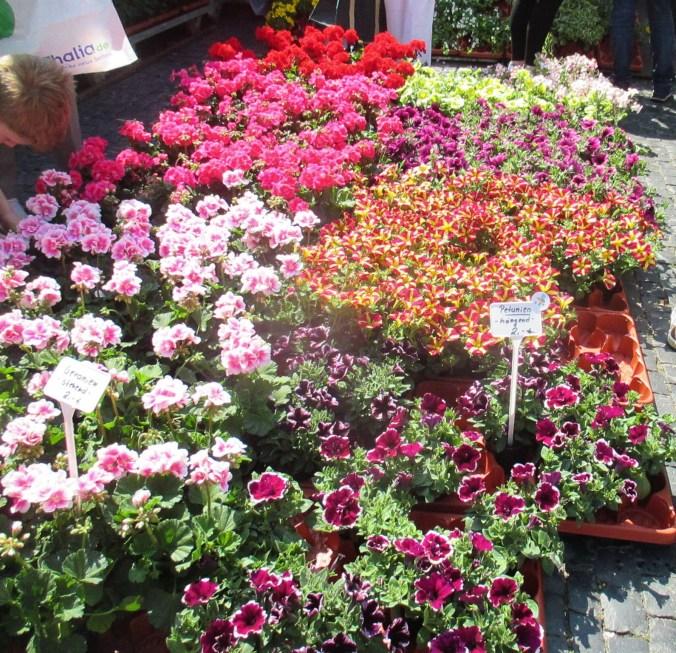 Weimarer Blumenmarkt 19.05 (3)