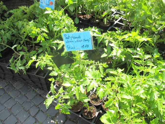 Weimarer Blumenmarkt 19.05 (5)
