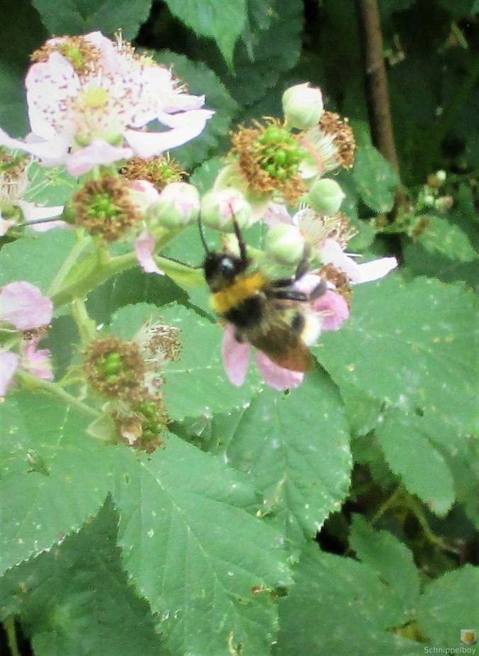 Blumen,Früchte,Insekten im Wald (5b) (2)