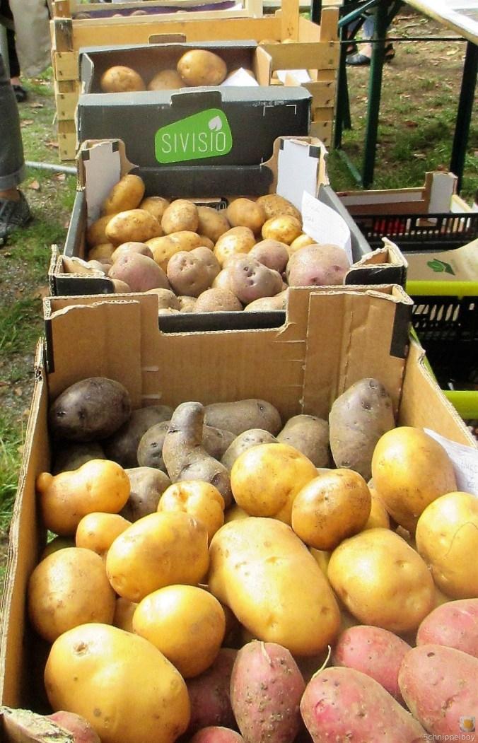 Handgemachter Quark mit Kartoffeln (1)