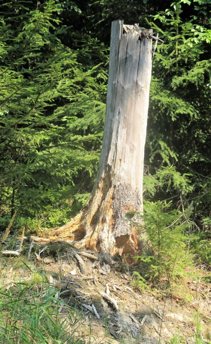 Im Wald -August 2019 (7)