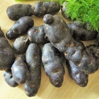 Lila-KartoffelGuacamoleSalate-7 (1)