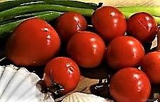 Linguine, scharfe Tomatensauce, Muschelragout (12)