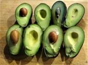 Avocado-Thunfisch Bowl (15)