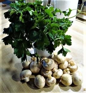 Fenchel,Süßkartoffeln und Champignon (13)