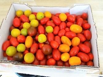 Grüner Spargel, Forelle, Tomaten auf Buchweizenpasta (10)