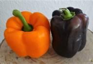 Gefüllte Paprika mit Tomatensauce und Reis (8)