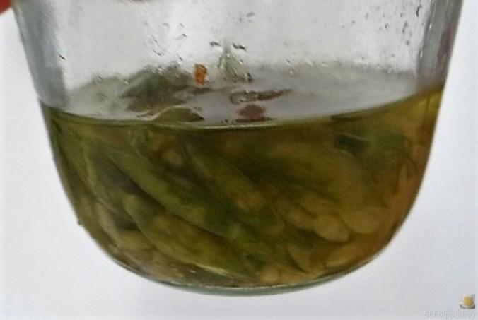 Staudensellerie mit Salzzitrone (28)